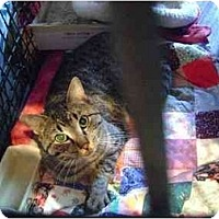 Adopt A Pet :: Skye - Westfield, MA