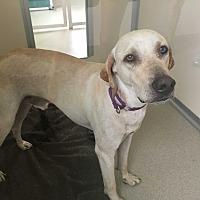 Adopt A Pet :: Cash - Myakka City, FL