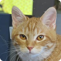 Adopt A Pet :: Mr. Welling - Northfield, MN