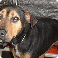 Adopt A Pet :: Rocky - Ridgeland, SC