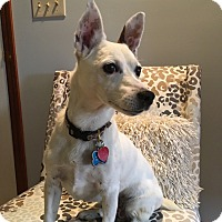 Adopt A Pet :: Spot - Blue Bell, PA