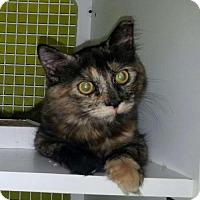 Adopt A Pet :: Gracie - St. Cloud, FL