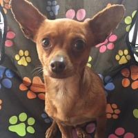 Adopt A Pet :: Marnie - Lodi, CA