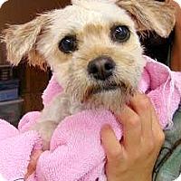 Adopt A Pet :: Hailey - Boulder, CO