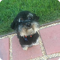 Adopt A Pet :: Marley - Fountain Valley, CA