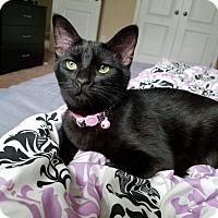 Adopt A Pet :: Solar - Garner, NC