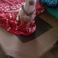 Adopt A Pet :: Avery - Visalia, CA