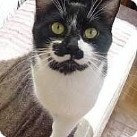 Adopt A Pet :: Marx - Cerritos, CA