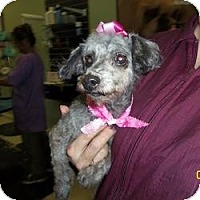 Adopt A Pet :: Nana - Shawnee Mission, KS