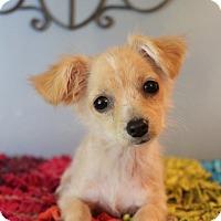Adopt A Pet :: Cleo - Bedminster, NJ