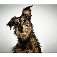 Adopt A Pet :: Davey - New York, NY