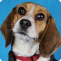 Adopt A Pet :: Mollie - Minneapolis, MN