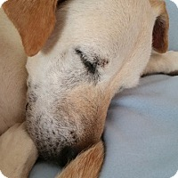 Adopt A Pet :: Mary - New Canaan, CT