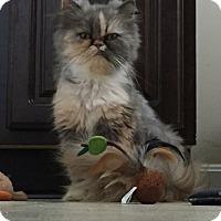Adopt A Pet :: Jolie - Columbus, OH