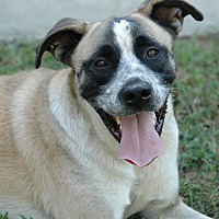 Adopt A Pet :: Max - Lawrenceville, GA