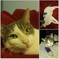 Adopt A Pet :: Paulie - Tampa, FL