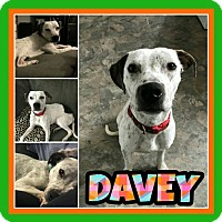 Adopt A Pet :: Davey - Fort Collins, CO