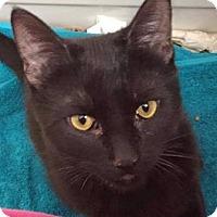 Adopt A Pet :: Royal - Walworth, NY