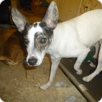 Adopt A Pet :: Melodie - Glastonbury, CT