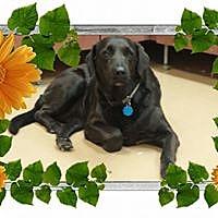 Adopt A Pet :: Macey - Gadsden, AL