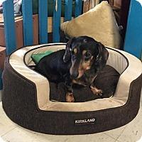 Adopt A Pet :: Penelope - York, SC