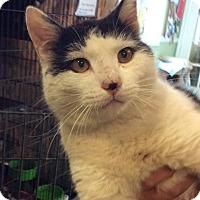 Adopt A Pet :: Yogi - Breinigsville, PA