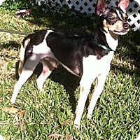 Adopt A Pet :: Peanut - Crowley, LA