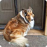 Adopt A Pet :: Rafael - Alderson, WV