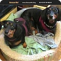 Adopt A Pet :: Wilma - Conroe, TX