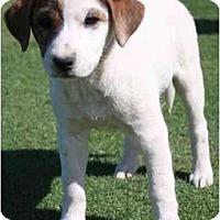 Adopt A Pet :: Chynna - Gilbert, AZ