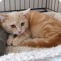Adopt A Pet :: Mugsy - Cincinnati, OH