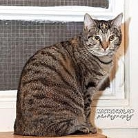 Domestic Shorthair Cat for adoption in Franklin, West Virginia - Violet BARN CAT HOME ONLY