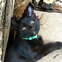 Adopt A Pet :: Cruze - oklahoma city, OK