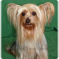 Adopt A Pet :: Angel - Palm City, FL