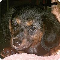 Adopt A Pet :: Mac - Knoxville, TN