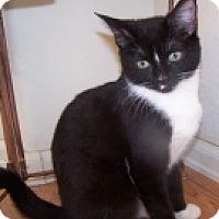 Adopt A Pet :: K-Blackberry-Minnie - Colorado Springs, CO