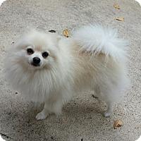 Adopt A Pet :: Frost - conroe, TX