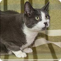 Adopt A Pet :: Harley - Elmwood Park, NJ