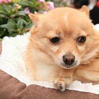 Adopt A Pet :: Avery - Elizabethtown, PA