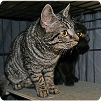Adopt A Pet :: Tyger and Lily - Milford, MA