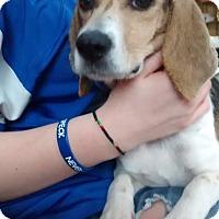 Adopt A Pet :: Sally - Media, PA