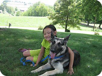 German Shepherd Dog Dog for adoption in Greeneville, Tennessee - Halo