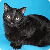Adopt A Pet :: POE - Laingsburg, MI