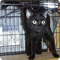 Adopt A Pet :: ComeOnYou - Lindenhurst, NY