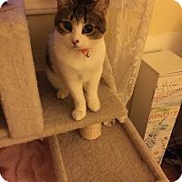 Adopt A Pet :: Emma - brewerton, NY