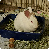 Adopt A Pet :: Peppermint - Maple Shade, NJ