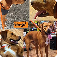 Adopt A Pet :: George - Muskegon, MI