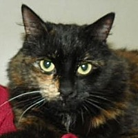 Adopt A Pet :: Audrey *Happy Single* - Richmond Hill, ON