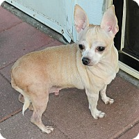 Adopt A Pet :: Scrappy - Umatilla, FL