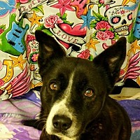Adopt A Pet :: Queenie - Fowler, CA